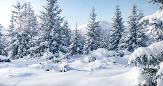 Duchovné zamyslenie na Druhú nedeľu  v cezročnom období  17. januára 2021